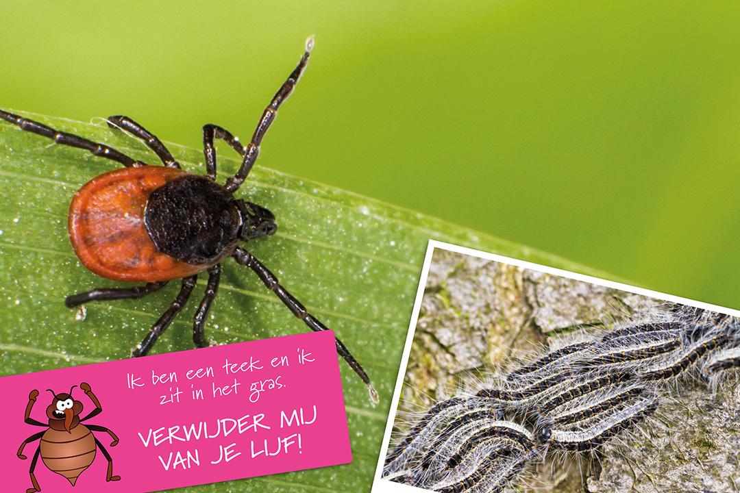 Poster-Wij-vallen-niet-uit-bomen-V2.indd